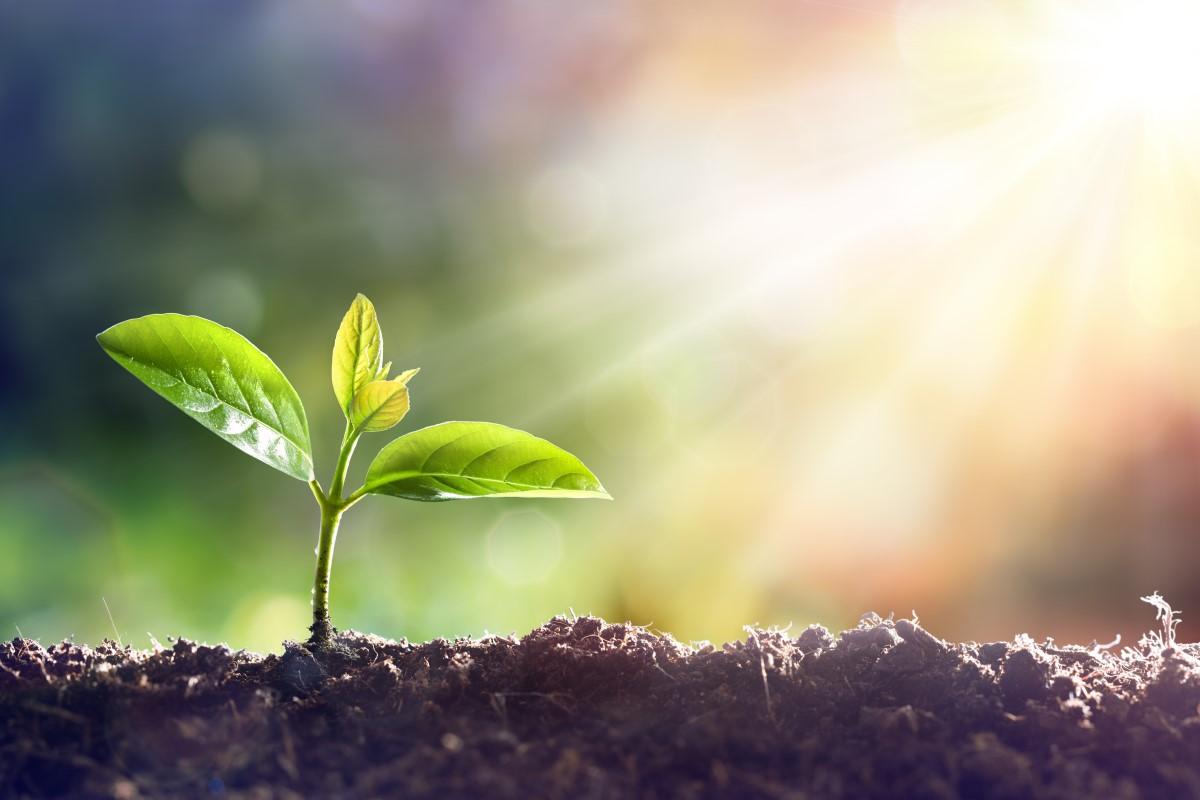 Gärtnerei- und Baumschulbedarf